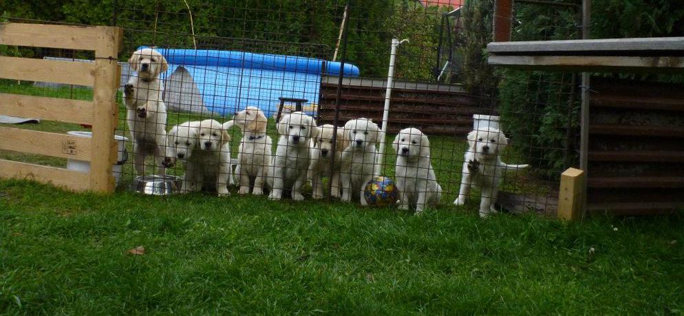 Rodinka za plotem